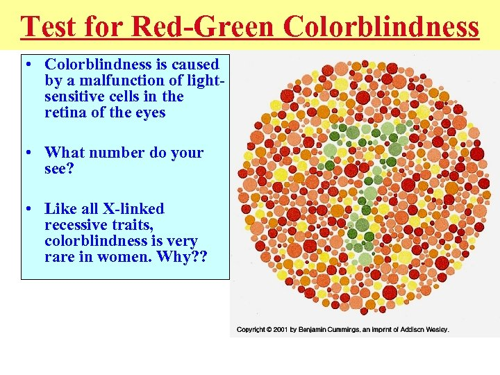 Test for Red-Green Colorblindness • Colorblindness is caused by a malfunction of lightsensitive cells