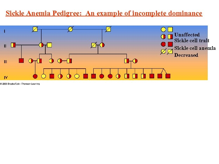 Sickle Anemia Pedigree: An example of incomplete dominance Unaffected Sickle cell trait Sickle cell