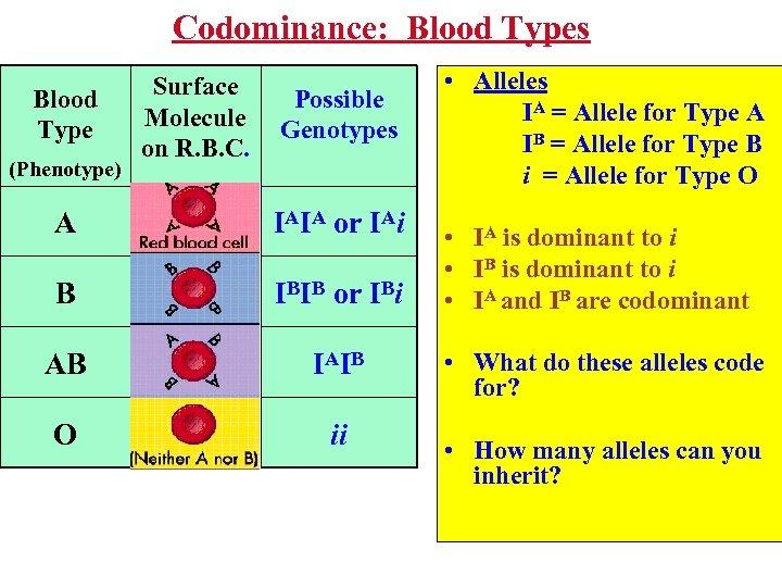 Codominance: Blood Types Blood Type (Phenotype) Surface Molecule on R. B. C. Possible Genotypes