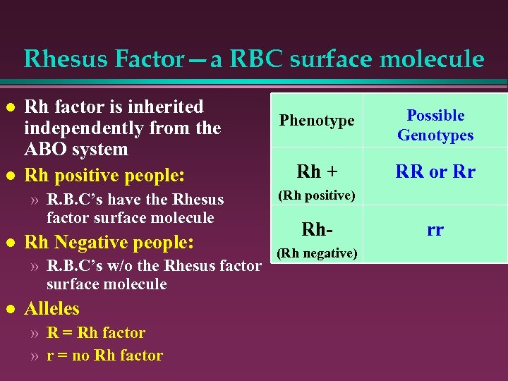 Rhesus Factor—a RBC surface molecule l l Rh factor is inherited independently from the