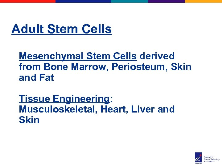 Adult Stem Cells Mesenchymal Stem Cells derived from Bone Marrow, Periosteum, Skin and Fat