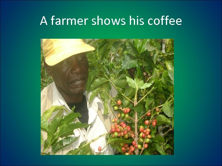 A farmer shows his coffee