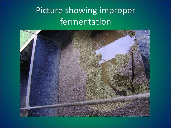 Picture showing improper fermentation