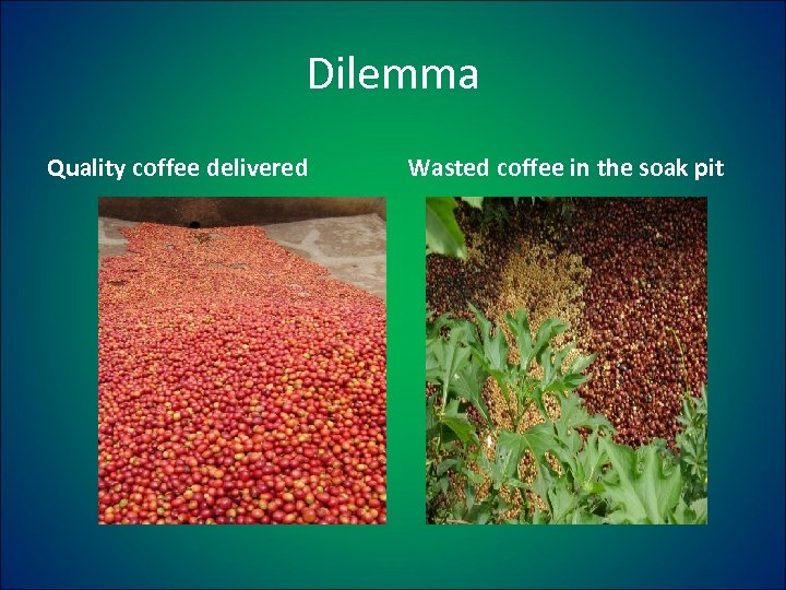 Dilemma Quality coffee delivered Wasted coffee in the soak pit