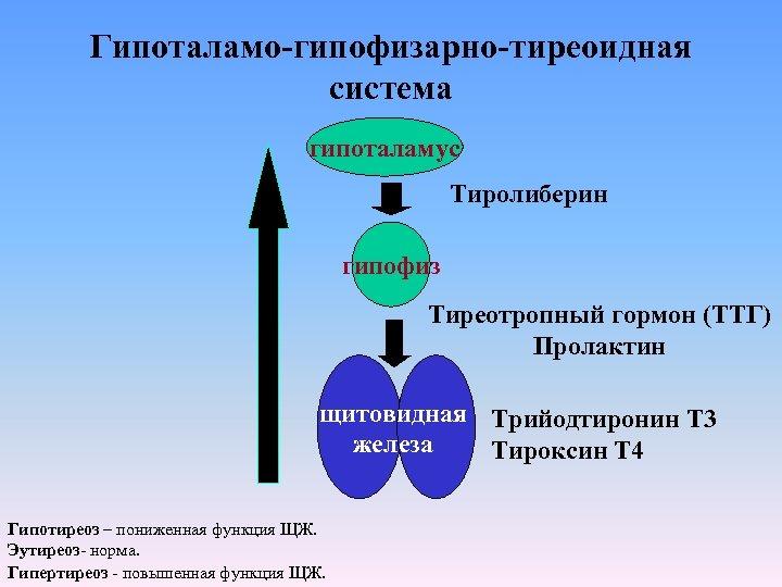 Гипоталамо-гипофизарно-тиреоидная система гипоталамус Тиролиберин гипофиз Тиреотропный гормон (ТТГ) Пролактин щитовидная Трийодтиронин Т 3 железа