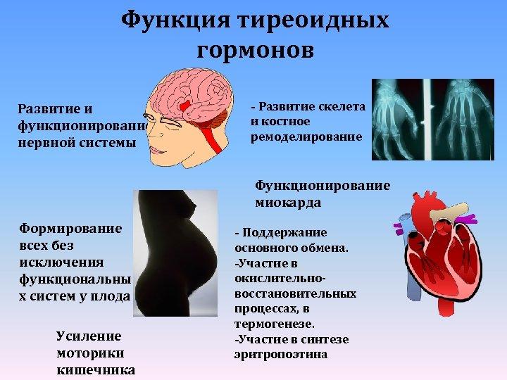 Функция тиреоидных гормонов Развитие и функционирование нервной системы - Развитие скелета и костное ремоделирование