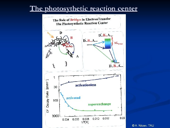 The photosythetic reaction center © A. Nitzan, TAU