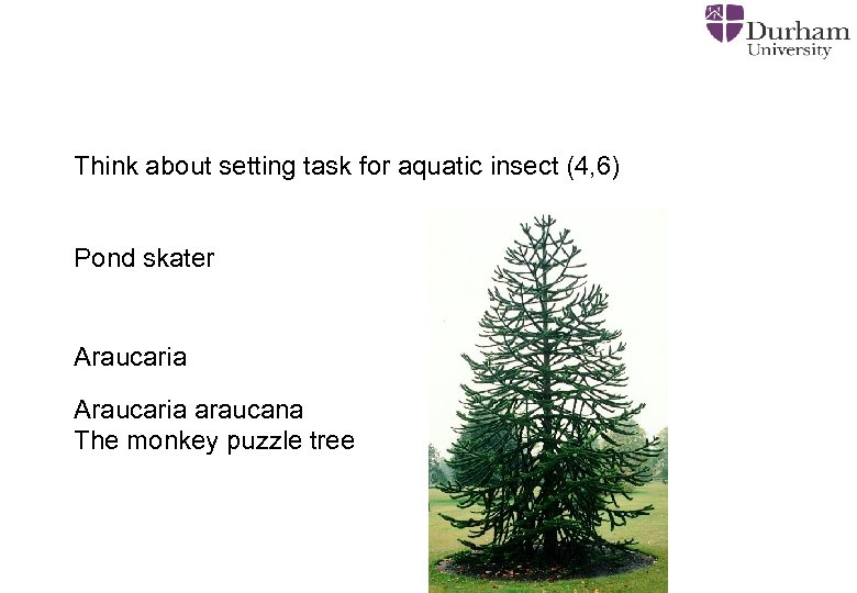 Think about setting task for aquatic insect (4, 6) Pond skater Araucaria araucana The