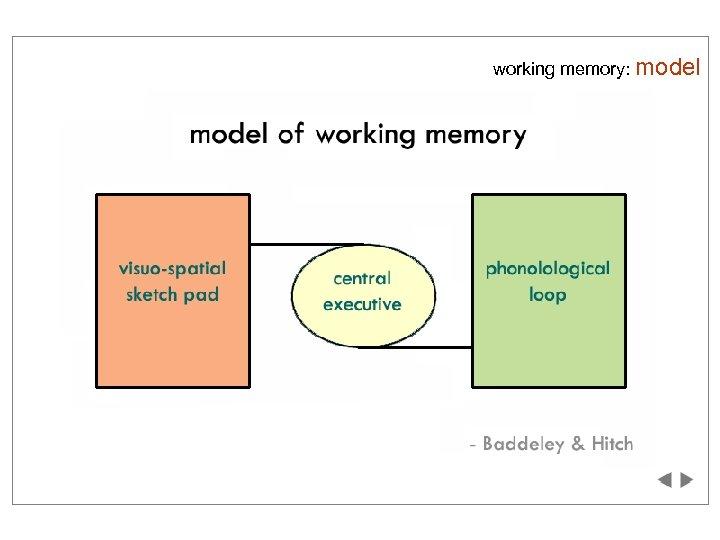 working memory: model