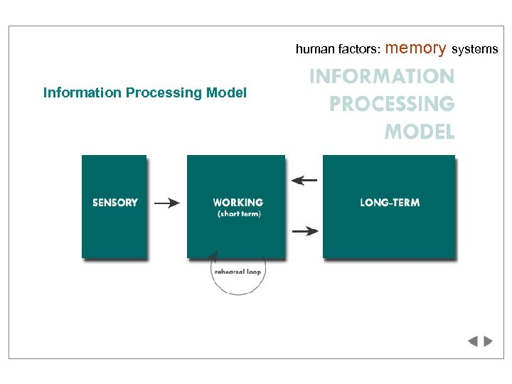 human factors: Information Processing Model memory systems