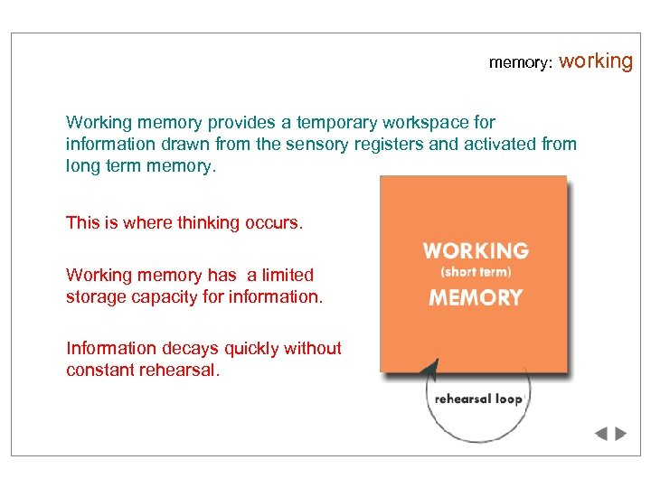 memory: working Working memory provides a temporary workspace for information drawn from the sensory