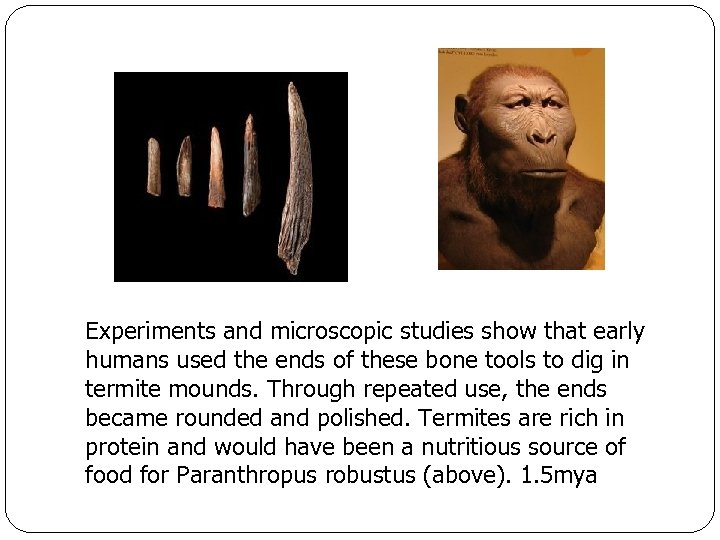 Experiments and microscopic studies show that early humans used the ends of these bone