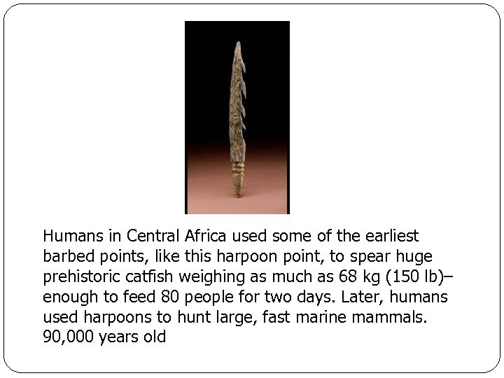 Humans in Central Africa used some of the earliest barbed points, like this harpoon