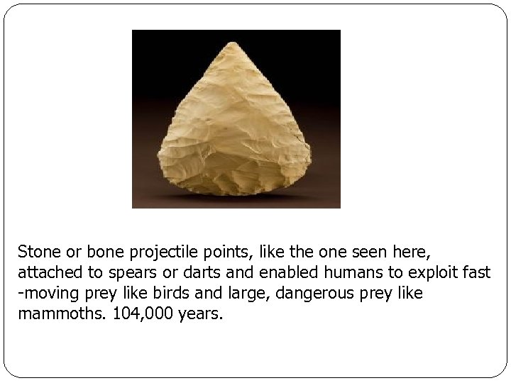 Stone or bone projectile points, like the one seen here, attached to spears or