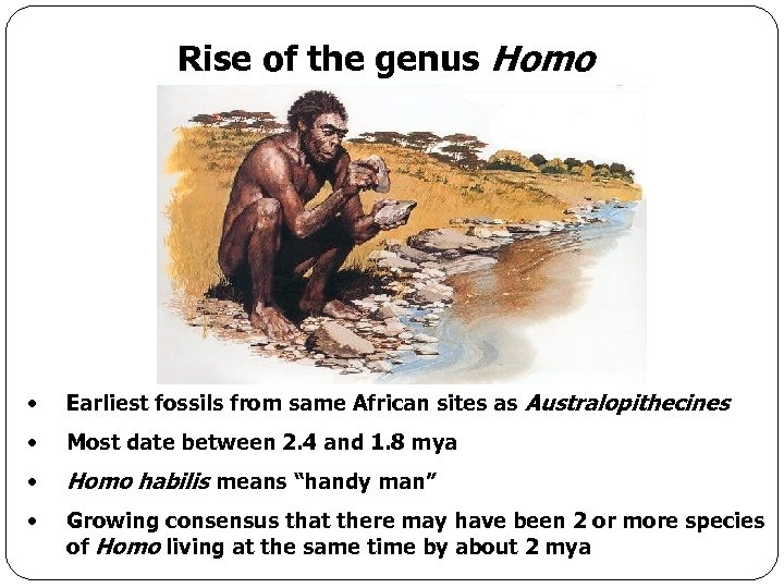 Rise of the genus Homo • Earliest fossils from same African sites as Australopithecines