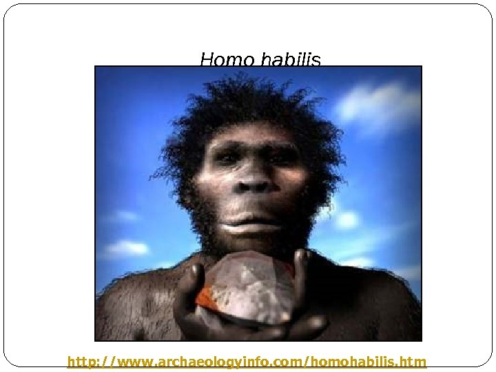 Homo habilis http: //www. archaeologyinfo. com/homohabilis. htm