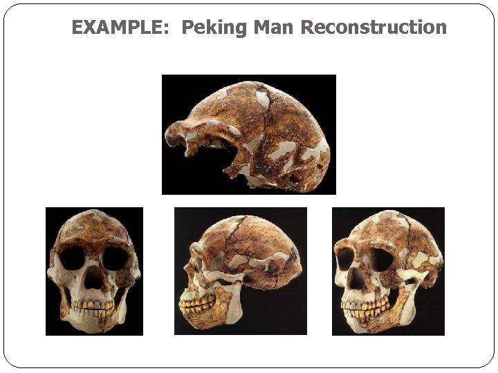 EXAMPLE: Peking Man Reconstruction