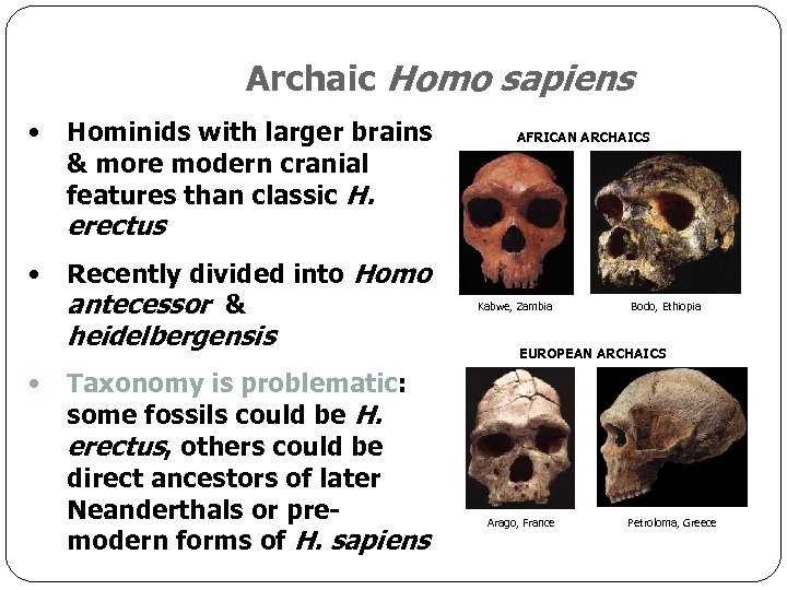 Archaic Homo sapiens • Hominids with larger brains & more modern cranial features than