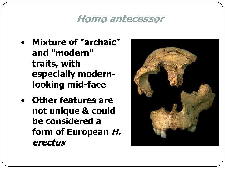 Homo antecessor • Mixture of