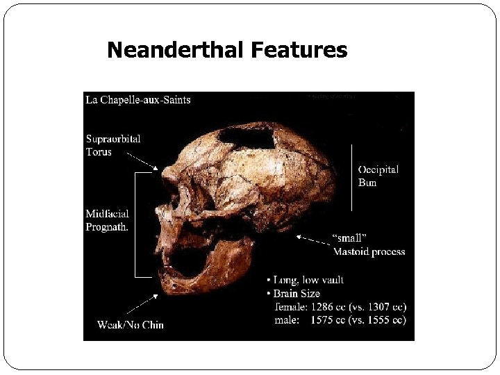 Neanderthal Features