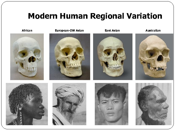 Modern Human Regional Variation African European-SW Asian East Asian Australian