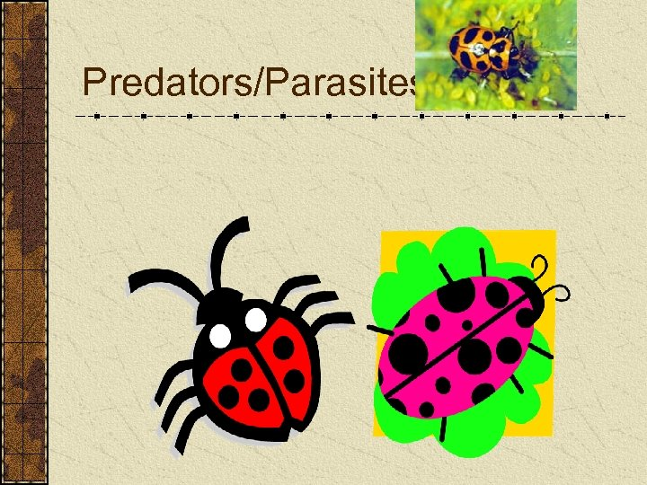 Predators/Parasites