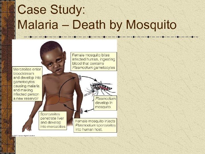 Case Study: Malaria – Death by Mosquito