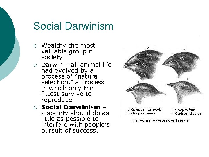 Social Darwinism ¡ ¡ ¡ Wealthy the most valuable group n society Darwin –