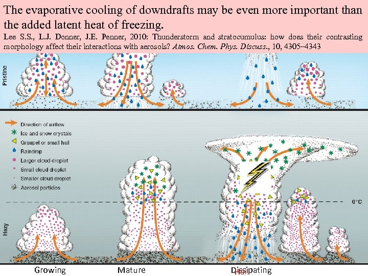 The evaporative cooling of downdrafts may be even more important than the added latent