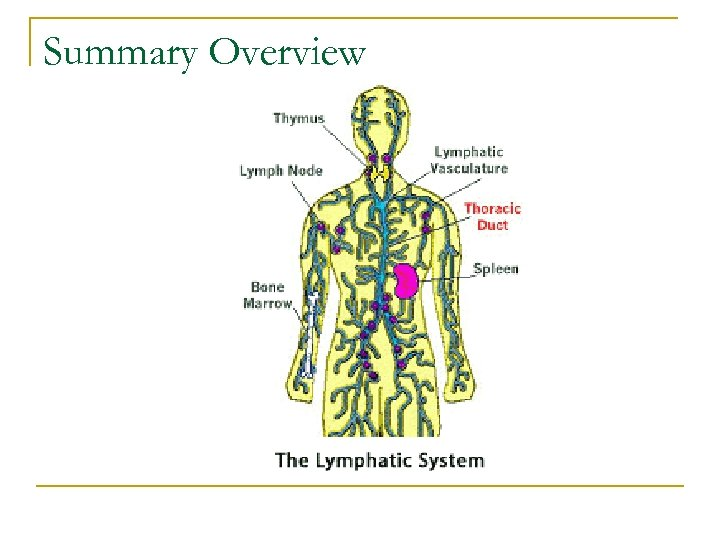Summary Overview