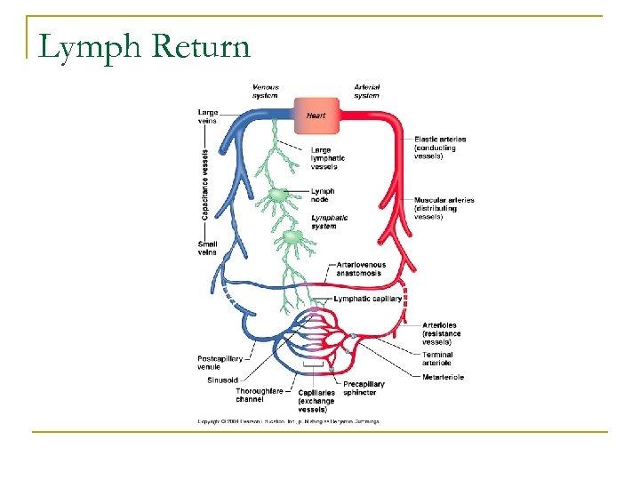 Lymph Return