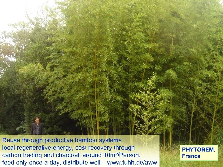 Reuse through productive bamboo systems local regenerative energy, cost recovery through carbon trading and