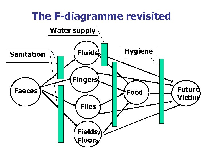 The F-diagramme revisited Water supply Sanitation Fluids Hygiene Fingers Faeces Food Flies Fields/ Floors