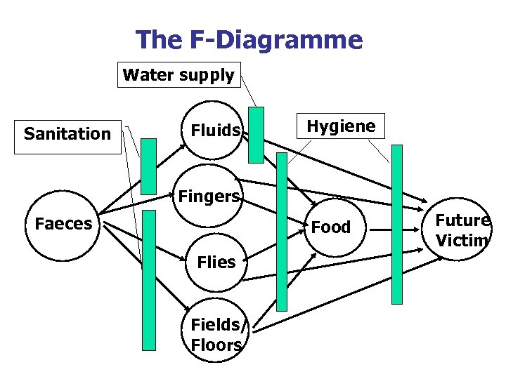 The F-Diagramme Water supply Sanitation Fluids Hygiene Fingers Faeces Food Flies Fields/ Floors Future