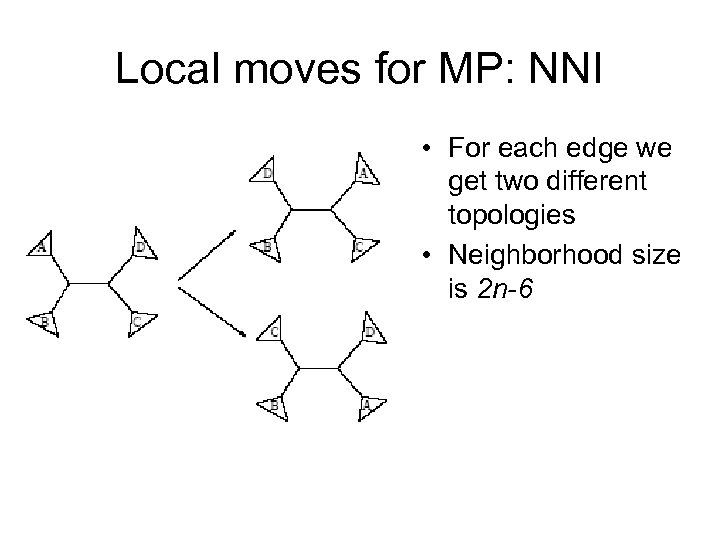 Local moves for MP: NNI • For each edge we get two different topologies