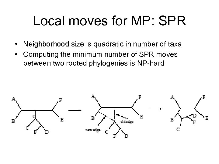 Local moves for MP: SPR • Neighborhood size is quadratic in number of taxa