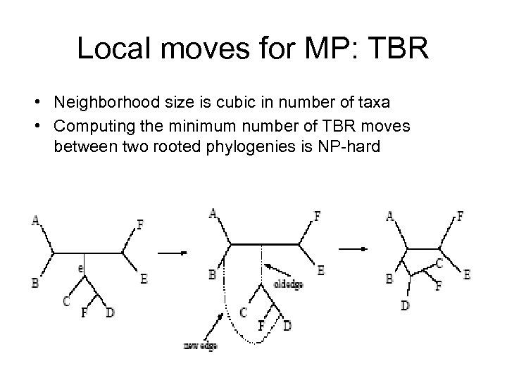 Local moves for MP: TBR • Neighborhood size is cubic in number of taxa