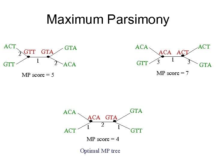 Maximum Parsimony ACT GTT 2 GTT GTA 1 2 GTA ACA GTT ACA ACT