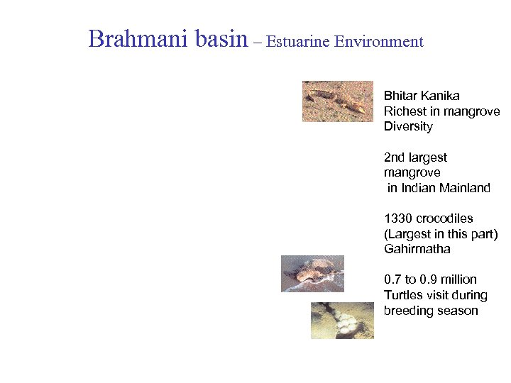 Brahmani basin – Estuarine Environment Bhitar Kanika Richest in mangrove Diversity 2 nd largest