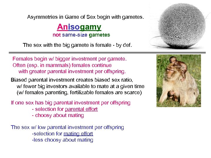 Asymmetries in Game of Sex begin with gametes. Anisogamy not same-size gametes The sex