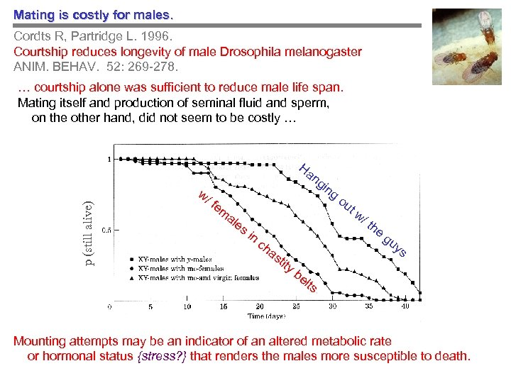 Mating is costly for males. Cordts R, Partridge L. 1996. Courtship reduces longevity of