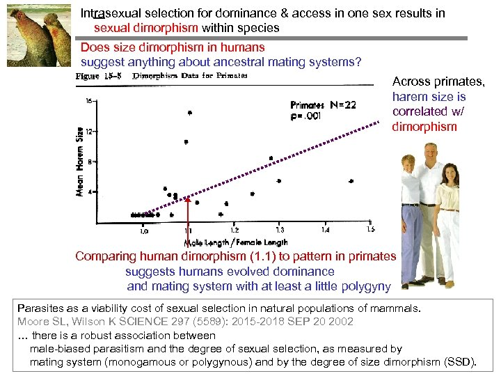 Intrasexual selection for dominance & access in one sex results in sexual dimorphism within