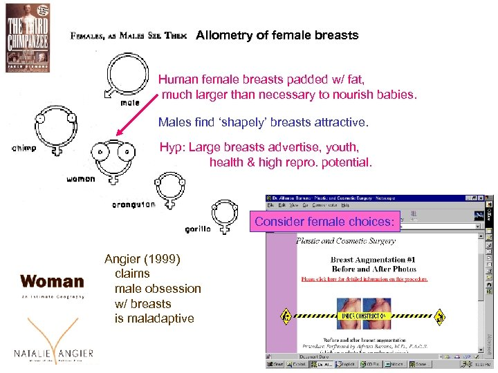 Allometry of female breasts Human female breasts padded w/ fat, much larger than necessary