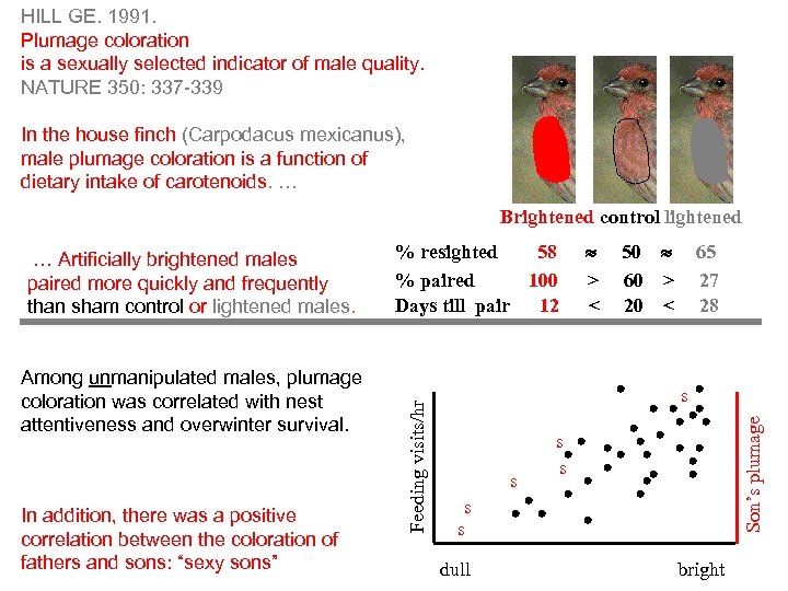 HILL GE. 1991. Plumage coloration is a sexually selected indicator of male quality. NATURE