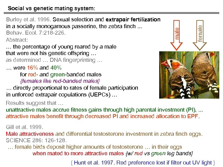 female Burley et al. 1996. Sexual selection and extrapair fertilization in a socially monogamous