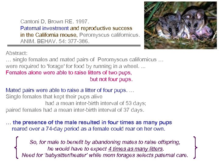 Cantoni D, Brown RE. 1997. Paternal investment and reproductive success in the California mouse,
