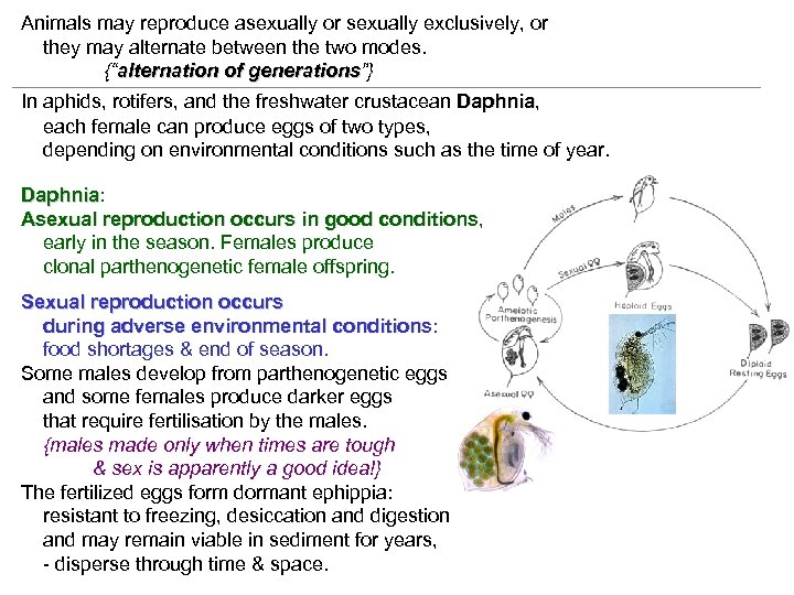 Animals may reproduce asexually or sexually exclusively, or they may alternate between the two