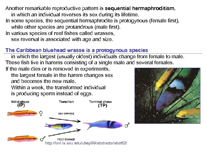 Another remarkable reproductive pattern is sequential hermaphroditism, hermaphroditism in which an individual reverses its