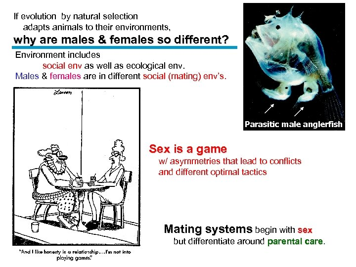 If evolution by natural selection adapts animals to their environments, why are males &