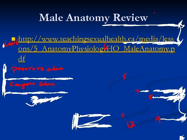 Male Anatomy Review n http: //www. teachingsexualhealth. ca/media/less ons/5_Anatomy. Physiology. HO_Male. Anatomy. p df